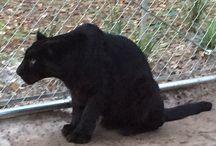 Jungle Safari Ride Tour / Jungle Safari Ride Tour at Dade City's Wild Things