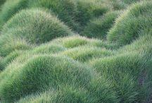Garden / Grasses