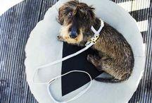 paniers, plaid et coussins pour chiens / Paniers,  couchages, couvertures, coussins pour chien design et déco