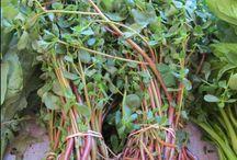 Veggies: Purslane (Postelein)