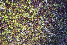L'or vert de Provence : l'huile d'olive / Reportage Exposure sur le procédé de production de l'huile d'olive, au moulin Saint-Vincent de Jouques. Photos et textes produits par l'office de tourisme avec la collaboration d'Eric Garcin, oléiculteur, pour les procédés.