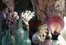 skulls shells