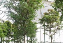 Opmaakstijlen atrium tuinen / Details bomen