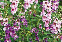 Flowers for the garden