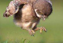 Funny owls!