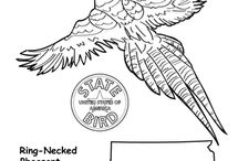 State Birds Coloring Pages / #statebirds #coloring