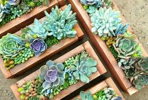 kaktus dlm kotak kayu