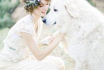Weddings and Animals