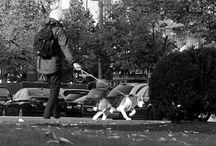 Paperback Street Photography / Street photography. Paperback Life. Romek Hanzlík