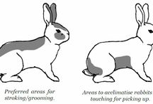 Hop, Hop, Hop... Future bunny rabbit owner info