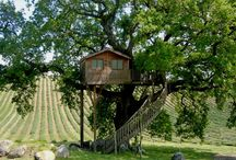 case su alberi