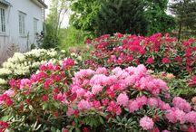 Hagen vår / Bilder fra hagen til inspirasjon og glede