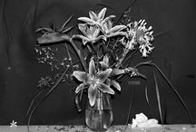 Flowers / by mar