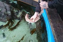 Byakvariet i Florø / Eit 20 000l akvarium med fisk og sjødyr frå skjærgården i Florø.