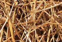 Barley straw algie prevention for ponds