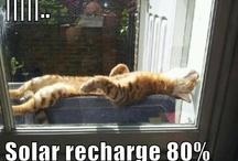 Gatti - Cats - Chats Memes