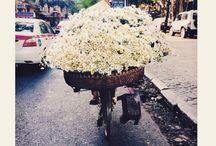 Papatyalar / Seviyor mu? Sevmiyor mu? Bırakın o düşünsün  #papatyalar #escicekcom #pazar #mutluluk #sevgi #tasarım #yakında