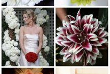 květiny - glamélie