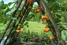 Garden love //