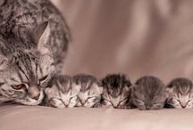famille chat