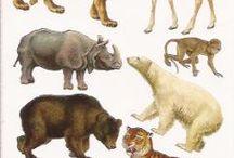 zvieratká v zoo