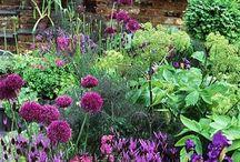 Ogród / Ogród