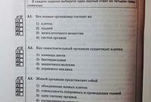 silsaikamp / silsaikamp