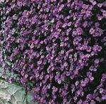 Flower Ideas for my Garden / Idea for perennial flowers to plant in my flower garden.