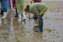 """(24/05/2016) Taller de marisqueo en Cambados / jornada de """"team building"""" para empresa organizada en Cambados con GUIMATUR en la que conocieron de cerca el día a día y la forma de vida de una mariscadora, como se marisquea y los diferentes tipos de almejas.  http://bluscus.es/producto/aprende-oficio-una-mariscadora-cambados/"""