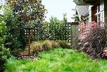 Back yard ideas, no mow lawn, dog friendly, low water / by Sue Bryce