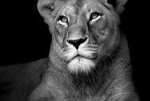 Animals Africa & Asia