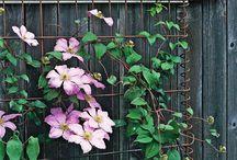 Landscape Design/ Gardening