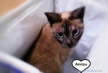 my cat Anzu chan