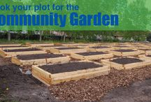 Stony Plain Community Gardens / The Multicultural Heritage Centre will be managing the Community Gardens in Stony Plain. The plots are located to the South of the Centre and can be reserved by anyone. (There is an annual fee of $30.)  Anyone interested in securing their own plot in the community garden can reserve their site by contacting 780 963-2777.