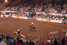 Rodeo Fun / Enjoy some country fun at area rodeos throughout the year