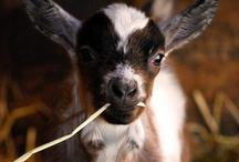 Animal Love / Beautiful photos of animals / by Jessica Kiff