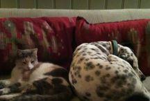 THELMA THE DOG AND MARIKA THE CAT