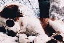 Min framtida hund