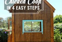 Chicken Life / collecting data to create the highest class poultry accomodations known to chicken-kind