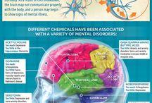 Psychology & the Brain
