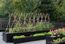 Moodboard tuin 's-Heer Hendrikskinderen