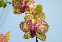 Orchid How To