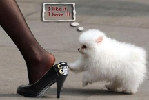 Fashion shoes / by ThBoxes Zha