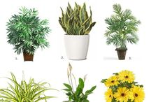 House plants & arrangements