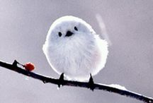 birds / They are soooooooo pretty!!!