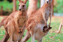 My Australia, everything Aussie / Anything and everything Australia