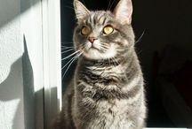 Mi Gato, My Cat, 我的貓, 私の猫 / My Cat