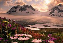 Project Alaska