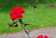 fleurs / by corinne chéry