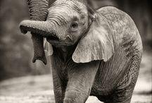 Éléphant ❤️
